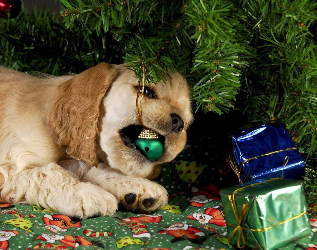 christmas-puppy-eating-ornament.jpg