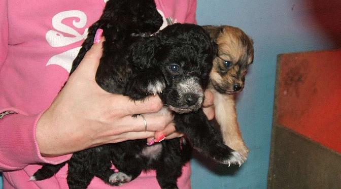 Update on Kiara's Pups