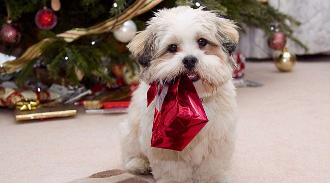 Why Puppies As Christmas Gifts Are A Bad Idea
