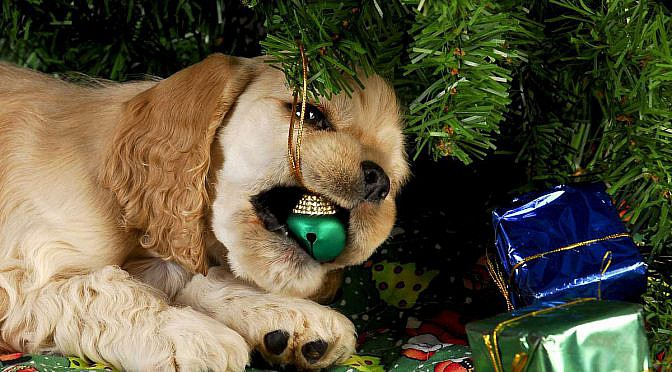 Why Puppies As Christmas Gifts Are STILL A Bad Idea