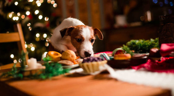 Pets and Christmas Food