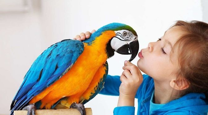 The Benefits of Bird Ownership