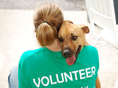 Become a Louth SPCA Volunteer