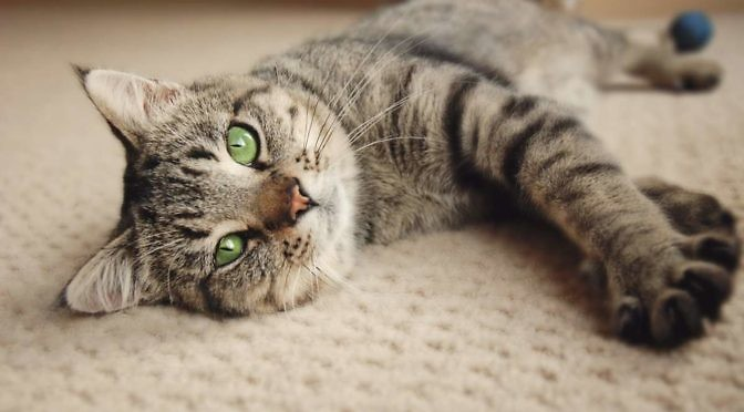 Reasons for neutering your cat