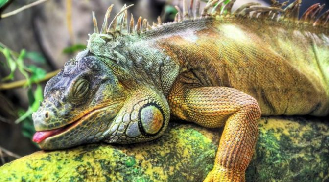 How to Care for Exotic Pets
