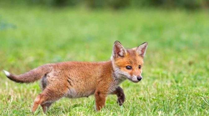 What to do if you find a baby wild animal