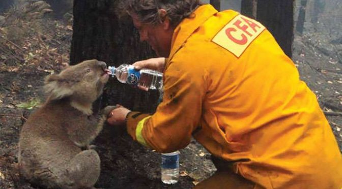 How to Help the Animals Impacted by the Australian Wildfires