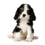 Louth SPCA